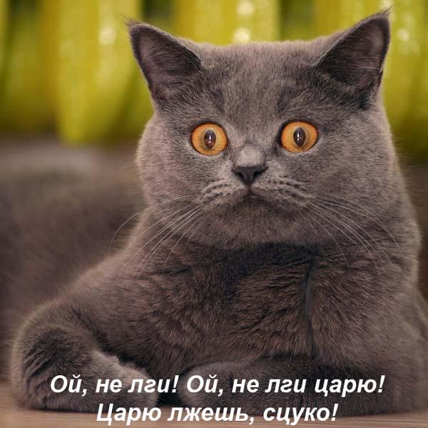 Просто прикольные фотки  котов